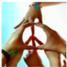 peacelover66_1917320