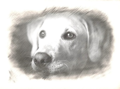My puppy! (sketch version)