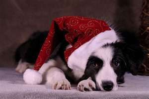 My puppy dogg. :)