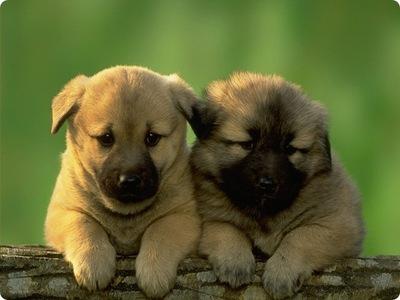 love puppys