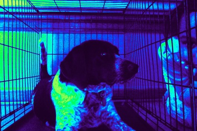 My dog in thermal; color