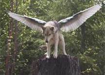 Flying Wolfie :D