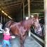 horse crazy girl