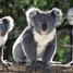 koalagirl77