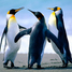 penguinluver731