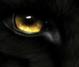 blackwolf888