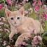 Peachcat