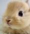 rabbitlover11