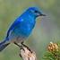 Geo-Birdie - US