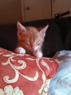My kitten :3