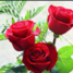 Roses947 - US