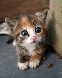 REAL Kitty