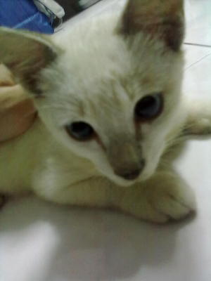 my cat, Bailey(: