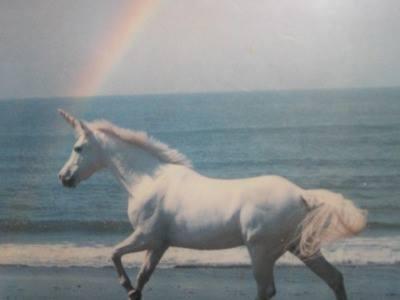 Unicorn :D