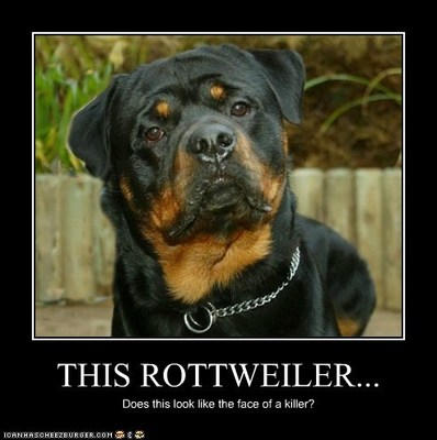 Real personality of rotties
